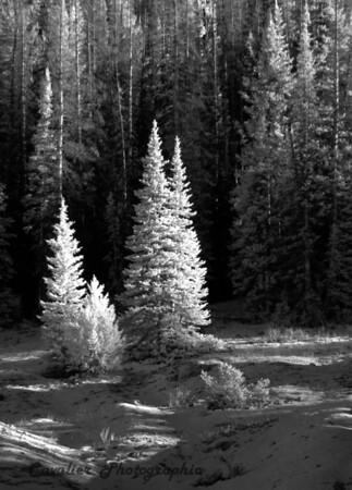 Dgrin SO 2008 - 129<br /> <br /> Cedar Breaks State Park, Utah