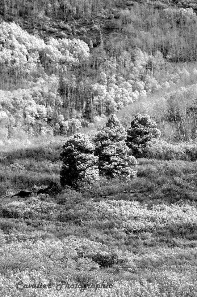 Dgrin SO 2008 - 416<br /> <br /> Lasal Mountain Loop, Moab, Utah