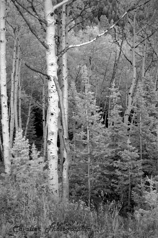 Dgrin SO 2008 - 121<br /> <br /> On our way to Cedar Breaks State Park, Utah