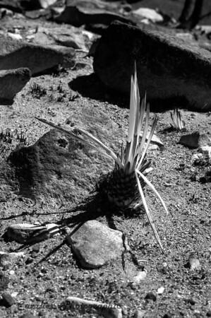 DGrin SO 2008 - 397<br /> <br /> Lasal Mountain Loop, Porcupine Rim