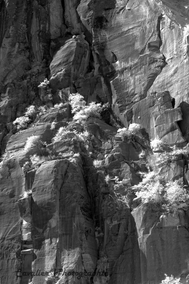 Dgrin SO 2008 - 083<br /> <br /> Zion National Park, Utah