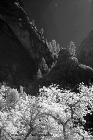 Dgrin SO 2008 - 076<br /> <br /> Zion National Park, Weeping Rock, Utah