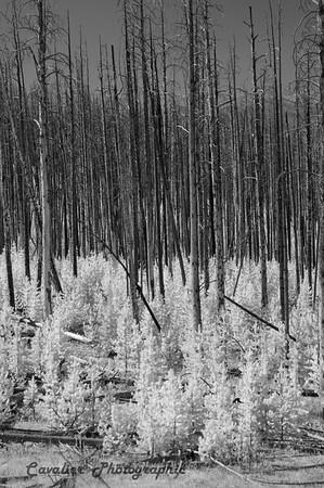 Yellowstone 067