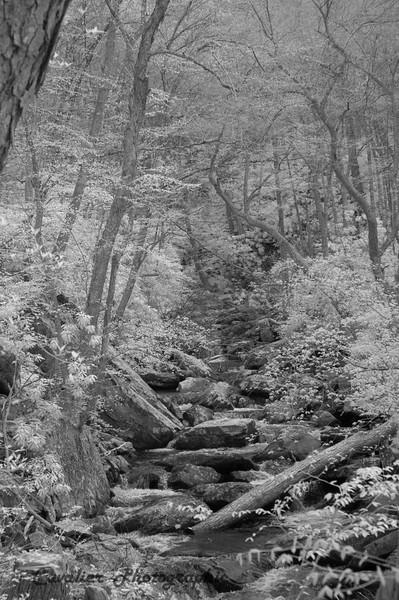 Cascades_036