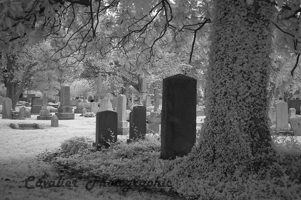 Elmwood Cemetery 090