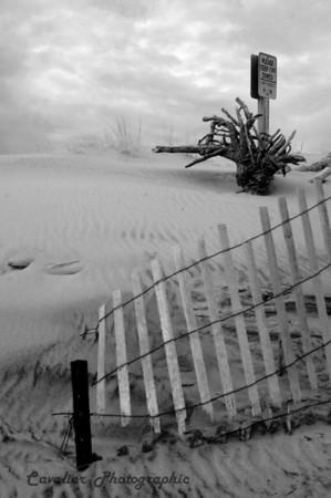 Va Beach 2009 CIR 278