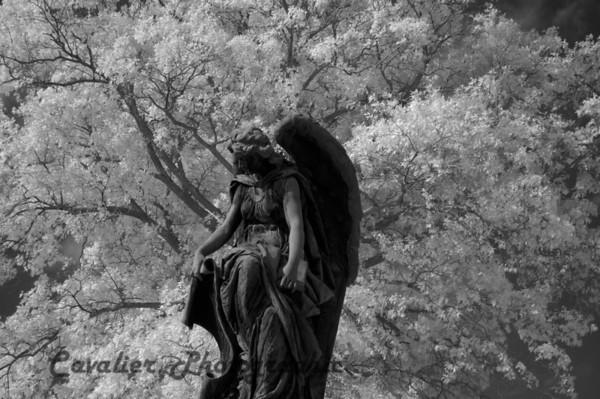 Elmwood Cemetery 003