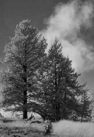 Yellowstone 090a
