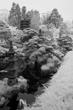 San Francisco CIR 344<br /> <br /> Japanese Tea Gardens, Golden Gate Park