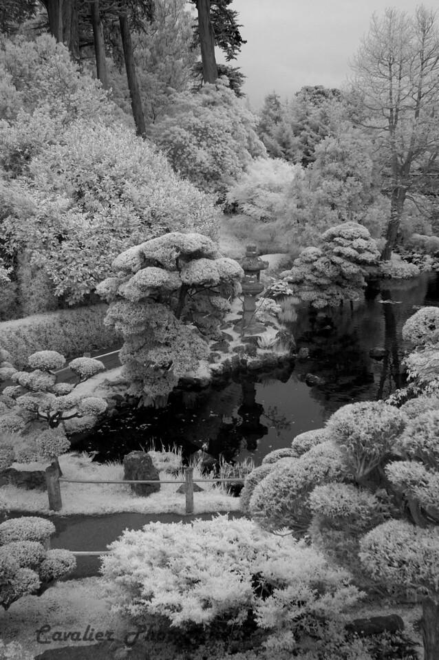 San Francisco CIR 329a<br /> <br /> Japanese Tea Gardens, Golden Gate Park