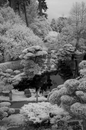 San Francisco CIR 329<br /> <br /> Japanese Tea Gardens, Golden Gate Park