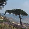 Del Mar coast