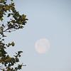Pale moon at Lake Natoma