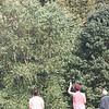 Tailed kite - 5