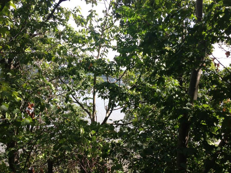 Hudson through trees