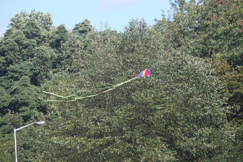 Tailed kite - 3