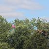 Tailed kite - 2
