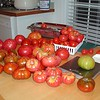 The day's harvest. I wish Tomatopalooza was this weekend!