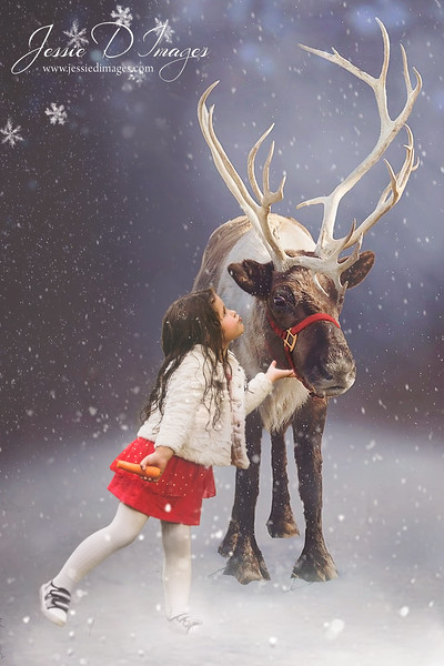 Jessie D Images - christmas photo - reindeer