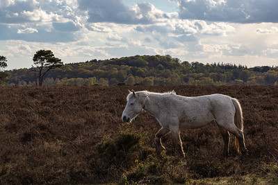 Christchurch , Hurst Point, New Forest,  Hampshire, UK