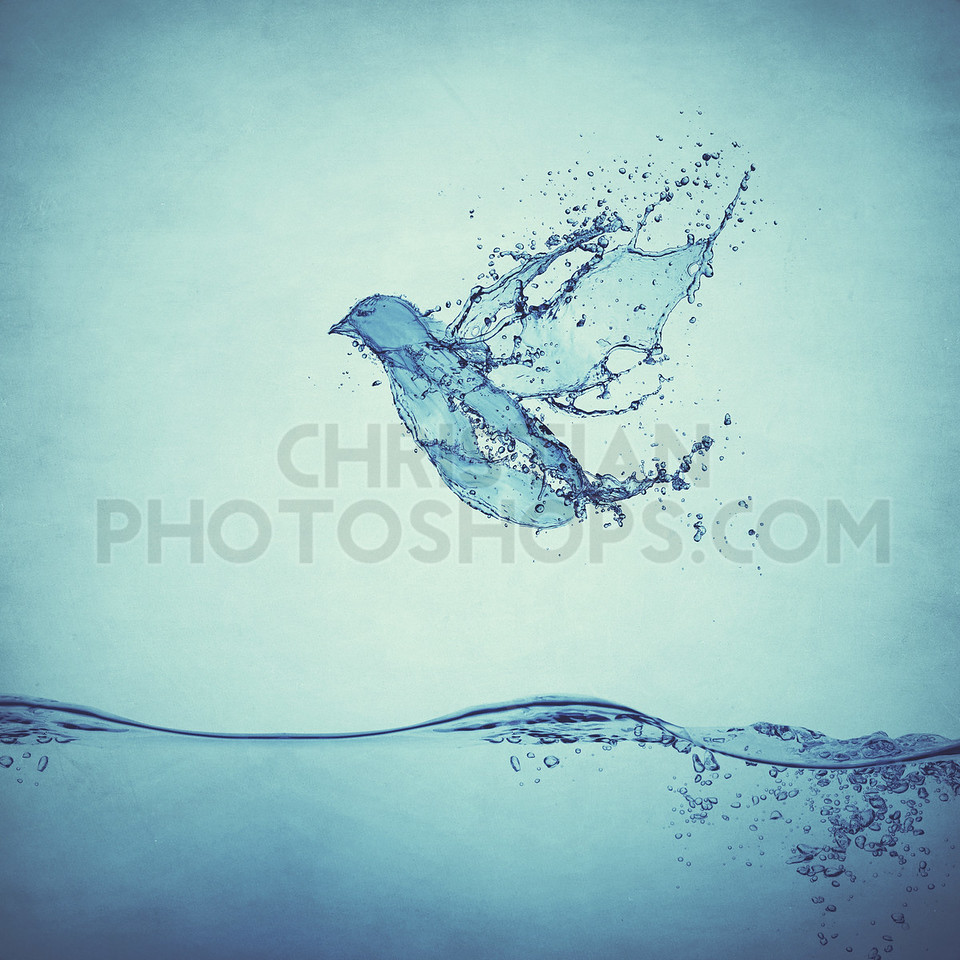 Bird with water