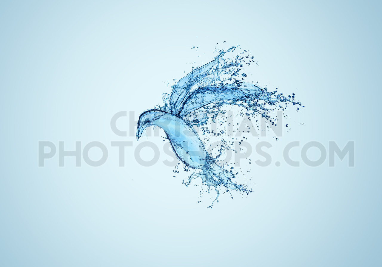 Bird of water
