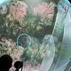 Dual View Simulator - underwater ROV
