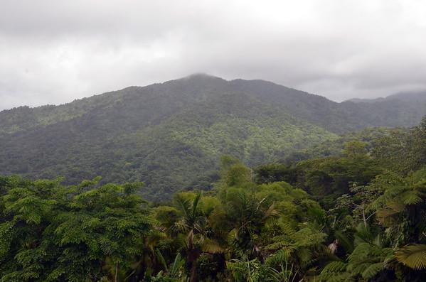 ELyunque Rain Forest