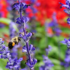 Deming Park, August 21, 2014.  Wabash Valley Master Gardeners area.  Brendan Kearns