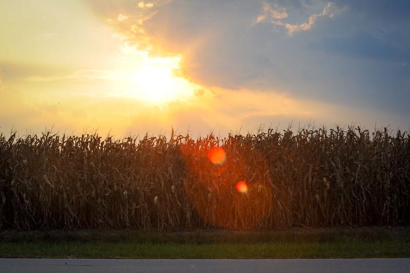 Sunrise Sunset Corn