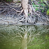 Wabash River Tree Roots September 2017