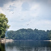 Eagles, Egrets Newport Wabash River August 2017