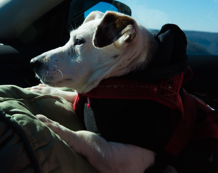 Scooby  on his Christmas Eve  ride around Raccoon Mt,liking the sunshine