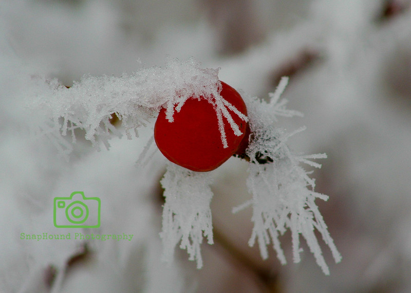 Frosted Red Berry