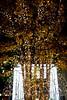 Tree in Marunouchi