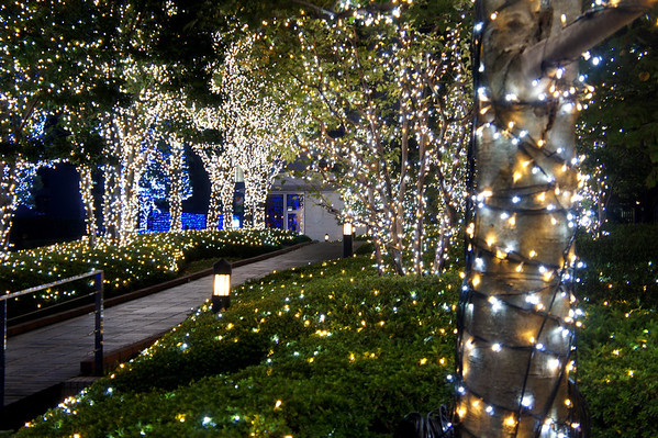 southern terrace illumination - 新宿