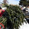 Big M Christmas Trees