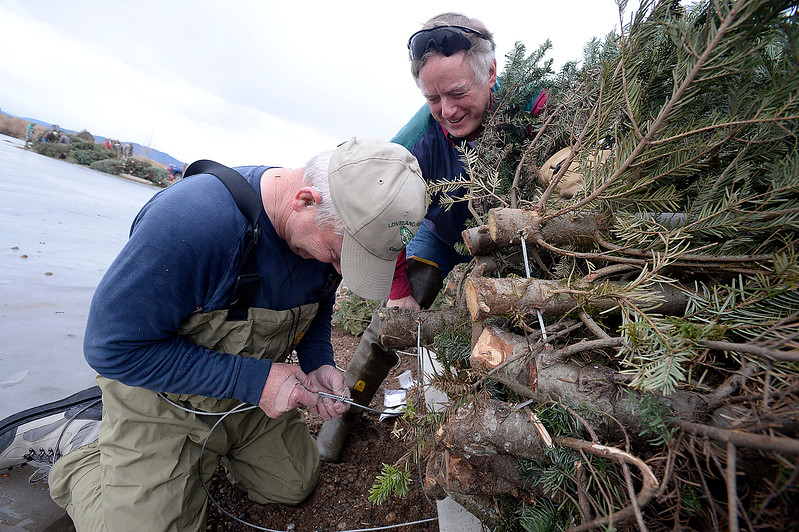 Volunteers John Gwinnup with the Loveland Fishing Club, left, and Marc Brown with Rocky Mountain Flycasters, right, attach recycled Christmas trees to a parking bumber with a cable Wednesday, Jan 10, 2018, in preparation of  sinking 100 recycled Christmas trees into the Bass Pond at River's Edge Natural Area in Loveland to improve fish habitat. (Photo by Jenny Sparks/Loveland Reporter-Herald)
