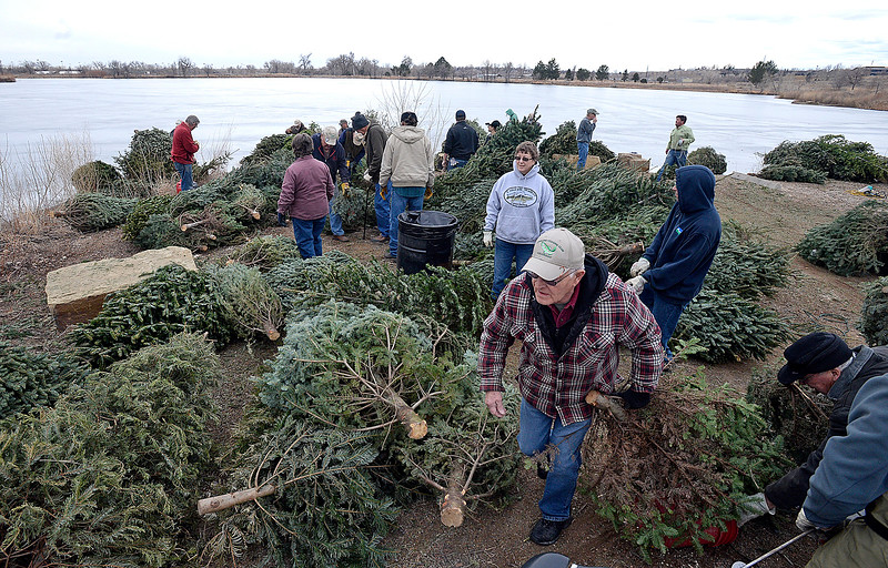 Rock Haskell, right, a member of the Loveland Fishing Club, moves a recycled Christmas tree from a pile Wednesday, Jan 10, 2018, as he and other volunteers prepare to sink 100 recycled Christmas trees into the Bass Pond at River's Edge Natural Area in Loveland to improve fish habitat. (Photo by Jenny Sparks/Loveland Reporter-Herald)