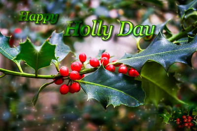Happy holly day