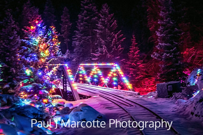 Santa's lighted forest.