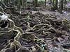 Image Title: Rainforest.  Image No. p1090210b