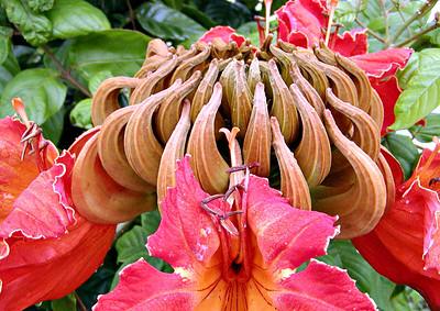 Image Title: Flower.  Image No. p3140077b