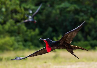 Imge Title: Frigate In Flight.  Image Title: kee0626b