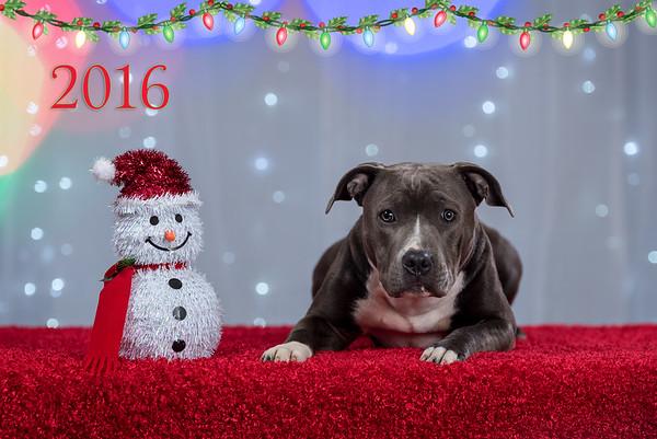 2016 Christmas Portrait -  - Saturday, Nov. 26, 2016