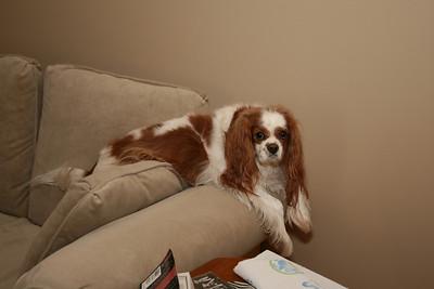 Auburn in his usual resting spot.