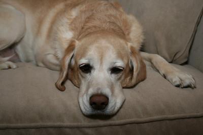 Jasmine starting to get sleepy now.