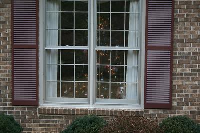Auburn looking outside.