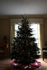 Our tree during the day.