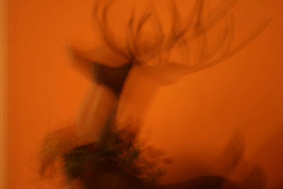 Neat!!!  My new reindeer, but camera not focused.